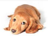 犬の皮膚病にはどんなものがある?